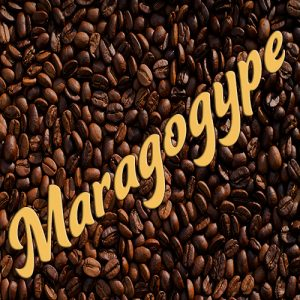 Maragogype koffie